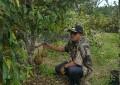 Desa Toapaya Utara Kembangkan Varietas Durian Unggulan