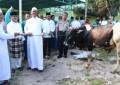 Pemkab Bintan Siapkan Hewan Qurban 17 Ekor Sapi Jelang Hari Raya Idul Adha